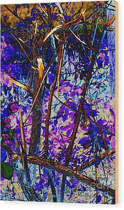 Woodland Wood Print by Carol Lynch