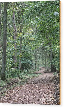 Woodland Path Wood Print by David Grant