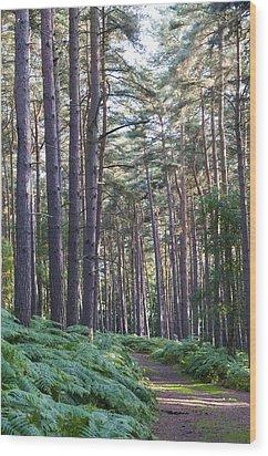 Woodland Path Wood Print by David Isaacson