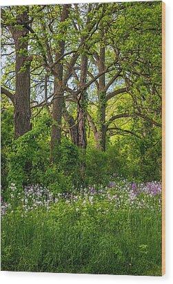 Woodland Phlox 2 Wood Print by Steve Harrington
