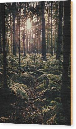 Woodland Trees Wood Print by Amanda Elwell