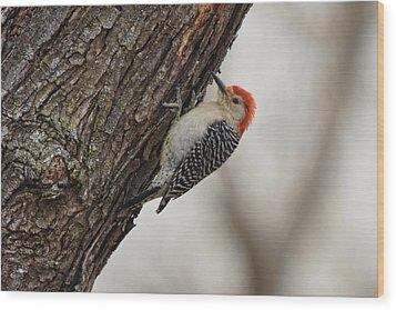 Woodpecker Wood Print by Alan Hutchins
