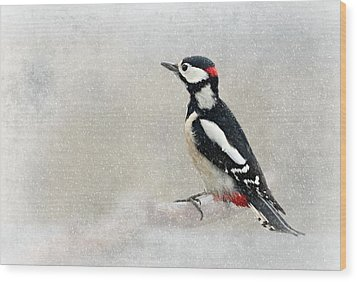 Woodpecker Wood Print by Heike Hultsch