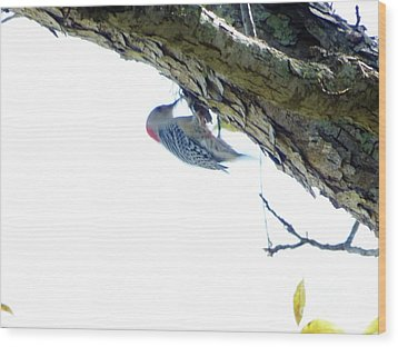 Woodpecker In A Tree Wood Print by Marie Bulger