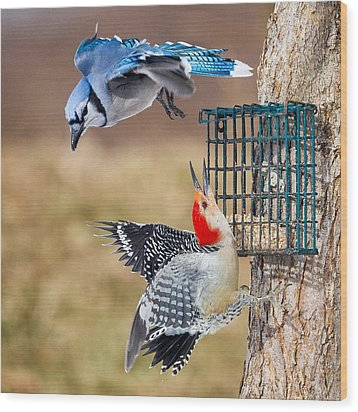 Woodpeckers And Blue Jays Square Wood Print by Bill Wakeley