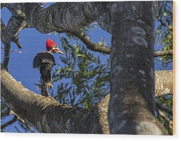 Woody Woodpecker Wood Print by David Gleeson