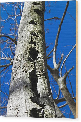 Wood Print featuring the photograph Woody's Paradise by Nick Kirby