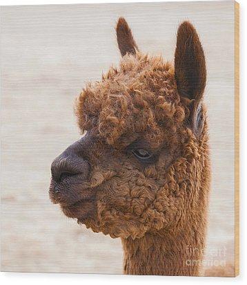Woolly Alpaca Wood Print by Jerry Cowart