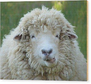Wooly Sheep Wood Print by Ramona Johnston