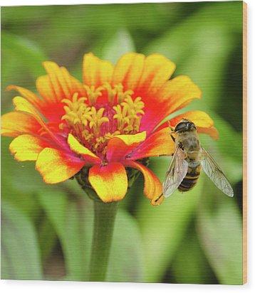 Working Bee Wood Print