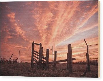 Working Cattle/ End Of Day Wood Print by Shirley Heier