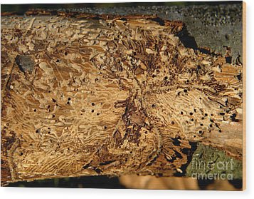 Wood Print featuring the photograph Worm Wood - 2 by Kenny Glotfelty