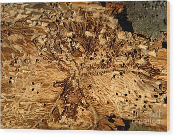 Wood Print featuring the photograph Worm Wood - 3 by Kenny Glotfelty