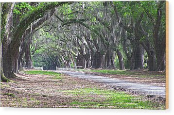 Wormsloe Drive 2 Wood Print by D Wallace