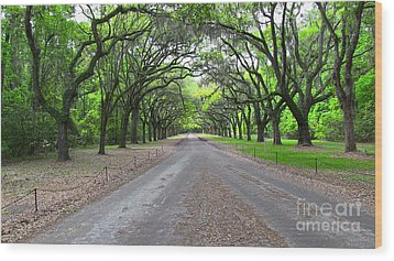 Wormsloe Drive Wood Print by D Wallace