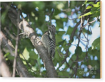 Worn Out Woodpecker Wood Print