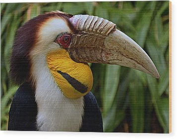 Wreathed Hornbill Wood Print by Eric Albright