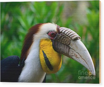 Wood Print featuring the photograph Wreathed Hornbill by Lisa L Silva