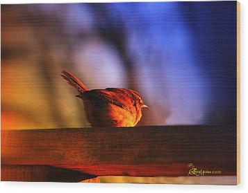 Wren In Early Morning's Light - Featured In In Newbies-nature Wildlife- Comfortable Art Groups Wood Print by EricaMaxine  Price