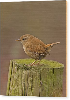 Wren Wood Print by Paul Scoullar