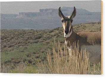 Wyoming Pronghorn Wood Print