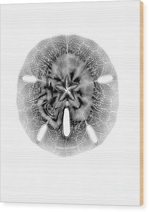 X-ray Of Sand Dollar Wood Print by Bert Myers