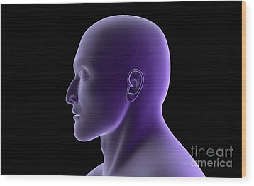 X-ray View Of Human Face, Profile View Wood Print by Stocktrek Images
