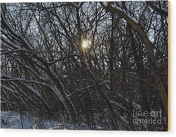 Yearning For Spring By Jammer Wood Print by First Star Art