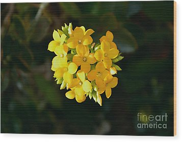 Wood Print featuring the photograph Yellow Allegria  by Ramona Matei