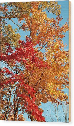 Yellow And Red Wood Print