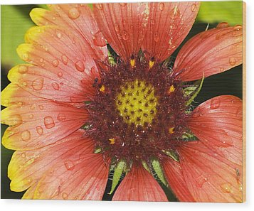 Wood Print featuring the photograph Yellow And Red by Robert Culver