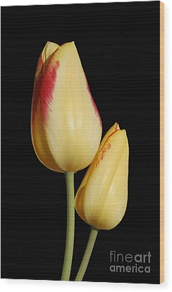 Yellow And Red Tulips  Wood Print