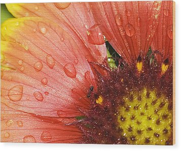 Wood Print featuring the photograph Yellow And Red With Ant by Robert Culver