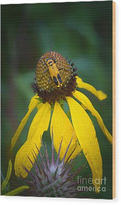 Yellow And Yellow Wood Print by Todd Bielby