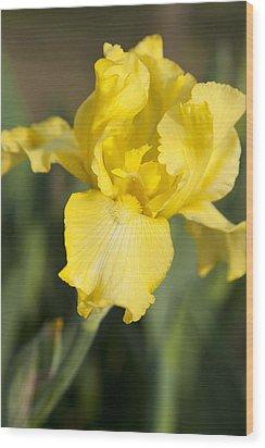 Yellow Beard Wood Print by Christopher McPhail