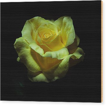 Yellow Beauty Wood Print by Cecil Fuselier