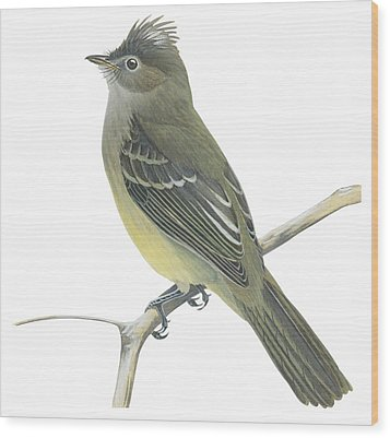 Yellow Bellied Elaenia  Wood Print by Anonymous