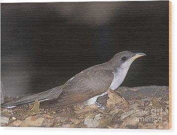 Yellow-billed Cuckoo Wood Print