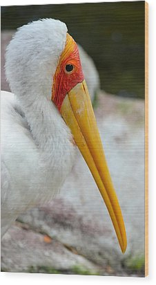 Yellow Billed Stork Wood Print by Richard Bryce and Family