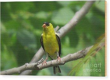 Yellow Bird Wood Print by France Laliberte