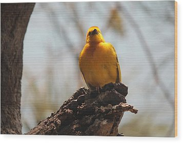 Yellow Bird In Trees Wood Print