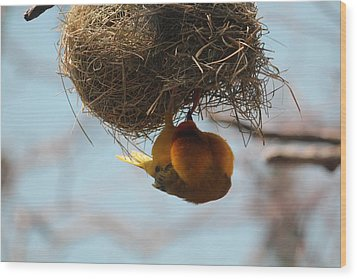 Yellow Bird Retuns To Nest Wood Print