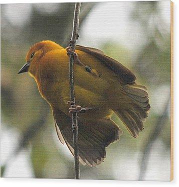 Yellow Bird Wood Print by Steve Archbold