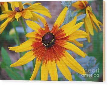 Wood Print featuring the photograph Yellow Burst by Allen Beatty