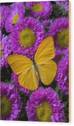 Yellow Butterfly And Pink Flowers Wood Print by Garry Gay