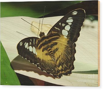 Yellow Butterfly Wood Print
