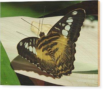 Yellow Butterfly Wood Print by Brigitte Emme