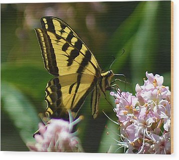 Yellow Butterfly Wood Print by Camille Lopez