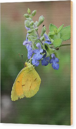 Yellow Butterfly On Blue Sage Wood Print