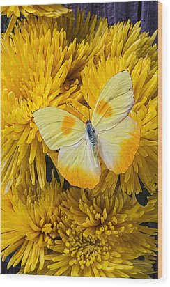 Yellow Butterfly On Yellow Mums Wood Print by Garry Gay
